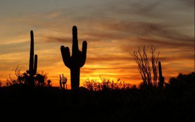 Arizona Saguaro Cactus Sunset