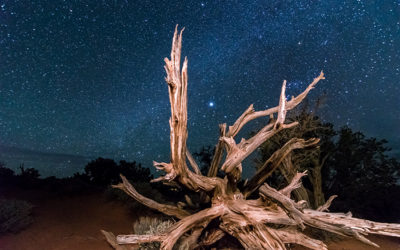 Desert Tree Under the Stars