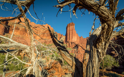 Old Trees at Fisher Towers