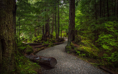 Trail Around Ward Lake Ketchikan Alaska
